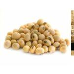 Jual Mesin Pulp Grinder Pembubur Kacang-Kacangan di Pekanbaru